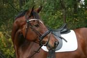 Hest til salg - Kavallier Dyrhave