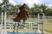Hest til salg - PIMBOLI