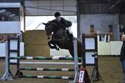 Hest til salg - COCOMO
