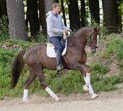 Hest til salg - TIMOTEI