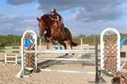 Hest til salg - GAZELL