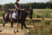 Hest til salg - FROMSMINDES EFFINO