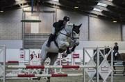 Hest til salg - CARRIE