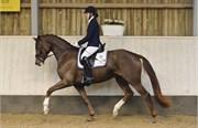 Hest til salg - 204 - NETSTUTTERIETS CAMPARI