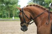 Hest til salg - FIRFOD JACOB KLAPHAT