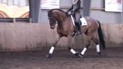 Hest til salg - LUNDERUP'S MIRO