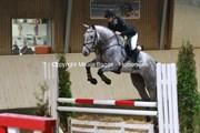 Hest til salg - QUINTUS