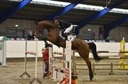 Hest til salg - LUCKY LAILA