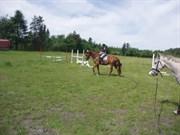 Hest til salg - LOPEZ