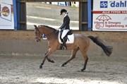 Hest til salg - SATCHMO