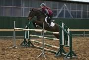 Hest til salg - Robbie K