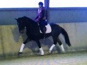 Hest til salg - Fahrenheit