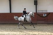 Hest til salg - HOECK'S CIDIDADA