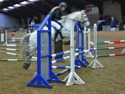 Hest til salg - SPRINGERS CALLISTO