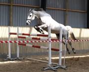 Hest til salg - Zera