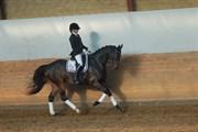 Hest til salg - LARISCHA ROW
