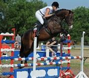 Hest til salg - Cantara