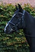 Hest til salg - TORNHØJS TURBO