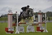 Hest til salg - TIMMO