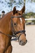 Hest til salg - Nygaards Zyrlig