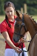Hest til salg - VEHLGAARDS ETERNITY