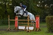 Hest til salg - SIR EDWARD