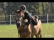 Hest til salg - CHANAJA WALES