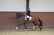 Hest til salg - RIBEAUVILLÉ