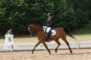 Hest til salg - DICK TURPIN
