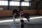 Hest til salg - LUCAS