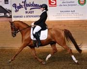 Hest til salg - NØRLUNDS CARTOON