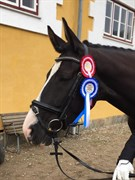 Hest til salg - DARK SHADOW