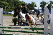 Hest til salg - MAGNUM