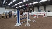 Hest til salg - COLANT