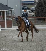 Hest til salg - DANIELO 2