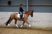 Hest til salg - JJ Lexus