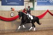 Hest til salg - BJERRESMINDES FELIPPA