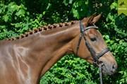 Hest til salg - Ru`sun Ley