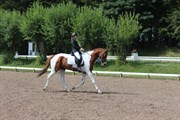 Hest til salg - Kielsgaardens Cirkeline