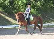 Hest til salg - RINTJE