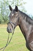 Hest til salg - Lina