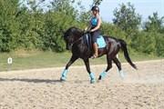 Hest til salg - SAUVIGNON