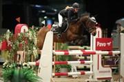 Hest til salg - BEAUTY