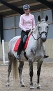Hest til salg - Cara