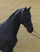 Hest til salg - HIP-HOP'S FEIVEL