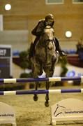 Hest til salg - CARNA