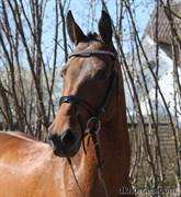 Hest til salg - PARI - ASHJA