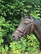 Hest til salg - Curly Ladegaard