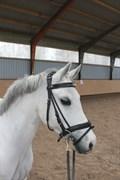 Hest til salg - AMIGO COOKY