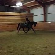 Hest til salg - OVERGAARDS VICTORIA